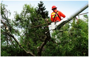 Bronx Tree Removal | 347-956-4330