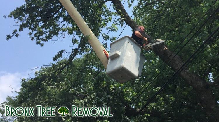 Bronx Tree Removal
