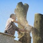 Bronx Tree Removal Company